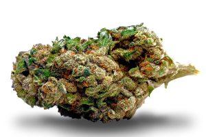 harlequin-susz-cbd-cannabis-light